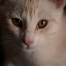 Pet Portrait - Ginger Kitten by Noth