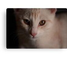 Pet Portrait - Ginger Kitten Canvas Print