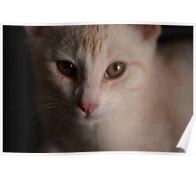 Pet Portrait - Ginger Kitten Poster