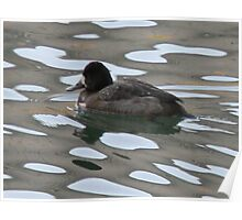 Duck in Polka Dots Poster