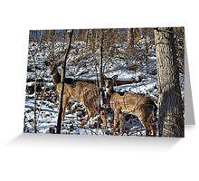 Pennsylvania Deer in Winter Greeting Card