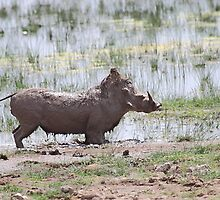 """That was good!!!"" Warthog After a Mud Bath by Carole-Anne"