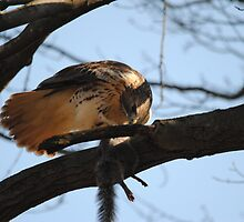 Redtail Hawk Hunting: After the Hunt by Thomas Mckibben