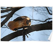 Redtail Hawk Hunting: After the Hunt Poster