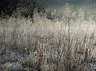 Frosted Wonderland by Carolyn  Fletcher