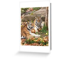 Two Siberian Tigers At Rest Greeting Card