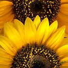 Sunflower #23 by BH Neely