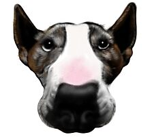 Front Faced Bull Terrier Photographic Print