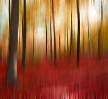 Autumn forest by Angela Bruno