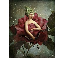 flowering love in a starry night Photographic Print