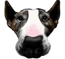 Front Faced Bull Terrier by Sookiesooker