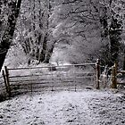 Winter Gate by Karen  Betts