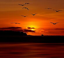 SUNSET FLYERS by RoseMarie747