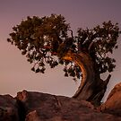 Pine Tree at Dead Horse Point by Armando Martinez