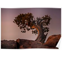 Pine Tree at Dead Horse Point Poster