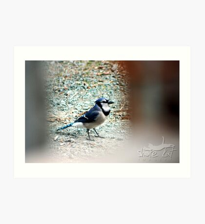 Blue Jay Way Art Print