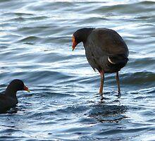 Walking On Water by stevealder