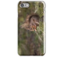 Red Squirrel in May sunshine iPhone Case/Skin