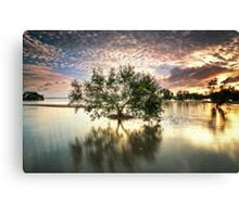 Once upon a Mangrove Canvas Print