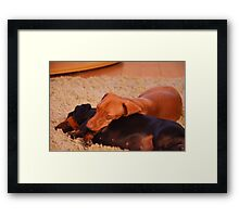 Daschunds enjoying open log fire Framed Print