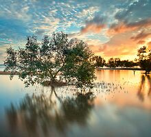 Once Upon a Mangrove II by PhotoByTrace