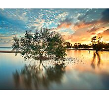 Once Upon a Mangrove II Photographic Print