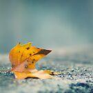 Fallen leaf by smilyjay
