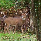 Backyard Bucks by Ron Russell