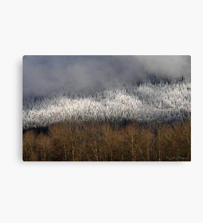 Frosted in the Valley Canvas Print