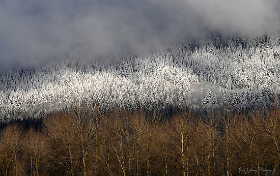 Frosted in the Valley by Annie Lemay  Photography