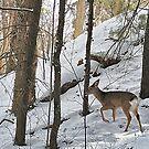 Oh Deer! by Monnie Ryan
