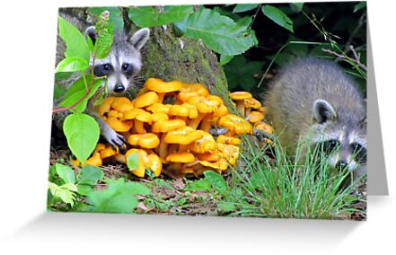 """""""Let's pinch some Witchy Orange Delights"""" by Jean Gregory  Evans"""