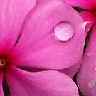 Constellation in Pink I by Amran Noordin