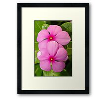 Pretty in Pink II Framed Print