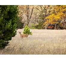 Autumn Doe Photographic Print