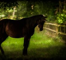 The Dark Unicorn by Chris Lord