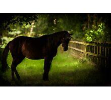 The Dark Unicorn Photographic Print