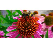 Would you wear a bee fur coat? Photographic Print