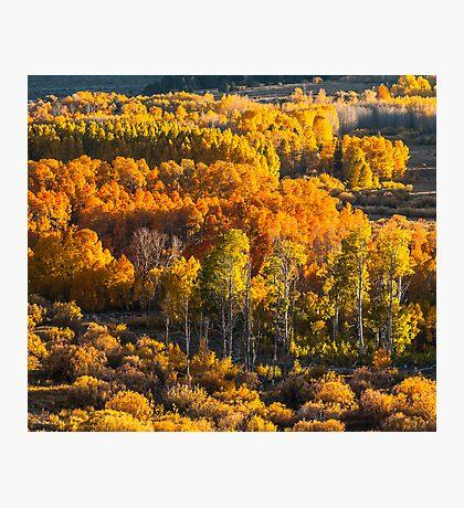 Conway Summit, Mono County, CA Photographic Print