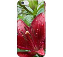 Red Asiatic Lily With Buds iPhone Case/Skin