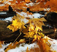 The Colour Of Autumn by Vince Russell