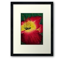 Red Day Lily Framed Print