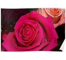 Peek at two roses Poster