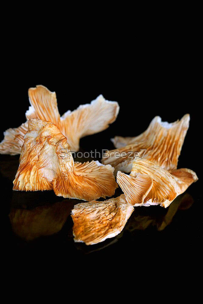 Oyster Mushrooms by SmoothBreeze7