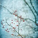 Snowberry by AngelaFanton