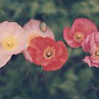 Poppies by Karin Elizabeth