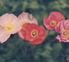 Poppies by Karin Elizabeth