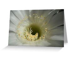 Kaktus Flower Macro. Greeting Card