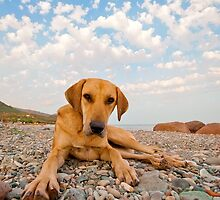 Playful Dog On The Beach by Kuzeytac