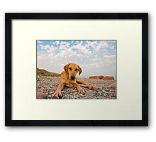 Playful Dog On The Beach Framed Print